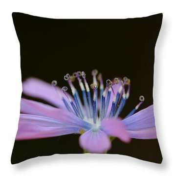 Chicory Throw Pillow by Richard Patmore
