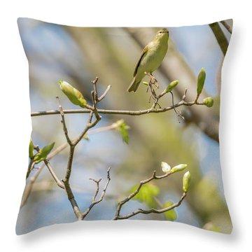Chiffchaff - Phylloscopus Collybita Throw Pillow