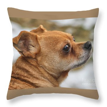 Chihuahua Throw Pillow by Debbie Stahre