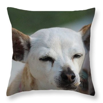 Chihuahua Snaggle Puss  Throw Pillow