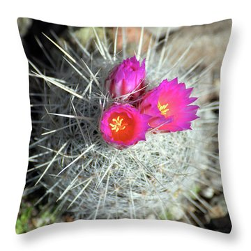 Chihuahua Snowball 1 Throw Pillow