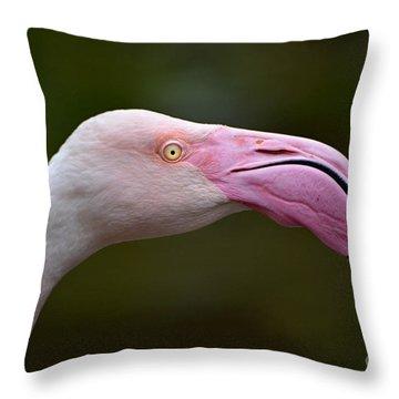 Chilean Flamingo Portrait Throw Pillow