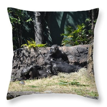 Throw Pillow featuring the photograph Chimps At Rest by John Black