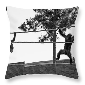 Throw Pillow featuring the photograph Chimps In Black And White by Miroslava Jurcik