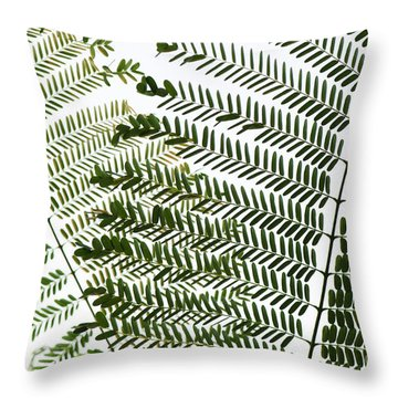 Chinese Albizia Leaves Throw Pillow