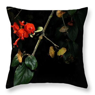 Chinese Hat Plant Throw Pillow
