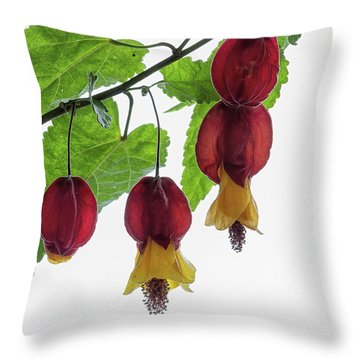 Chinese Lantern 4 Throw Pillow