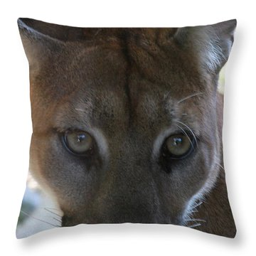 Throw Pillow featuring the photograph Chinook by Laddie Halupa