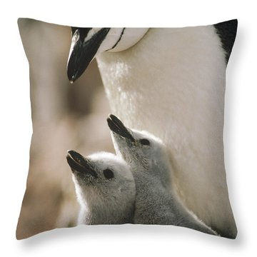 Chinstrap Penguin Pygoscelis Antarctica Throw Pillow by Tui De Roy