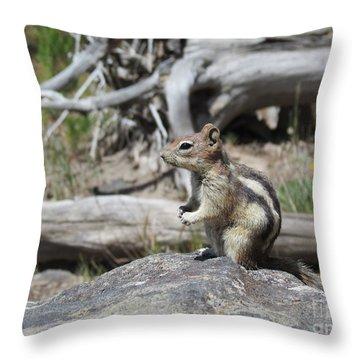 Chipmunk At Yellowstone Throw Pillow