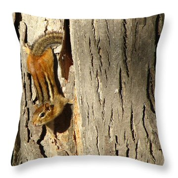 Chipmunk In Fall Throw Pillow