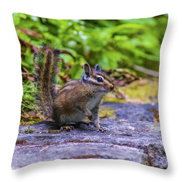 Throw Pillow featuring the photograph Chipmunk by Jonny D
