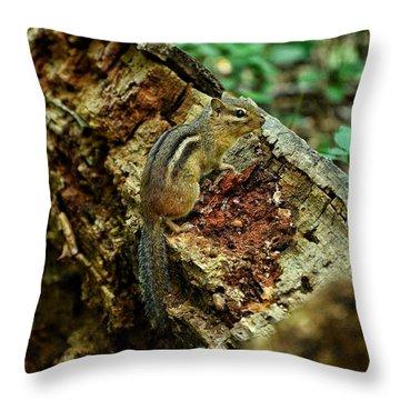 Chipmunk Throw Pillow by Nikki McInnes