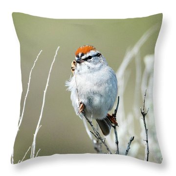 Throw Pillow featuring the photograph Chipping Sparrow by Mike Dawson
