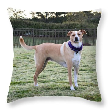Chloe At The Dog Park Throw Pillow