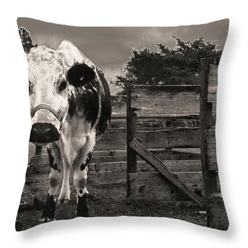 Chocolate Chip At The Stables Throw Pillow