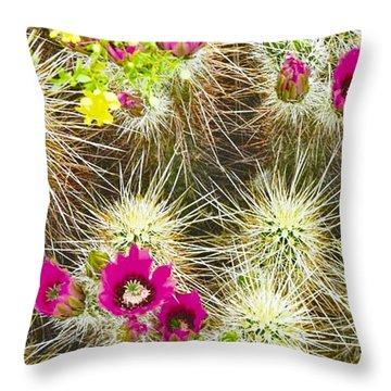 Cholla Cactus Blooms Throw Pillow