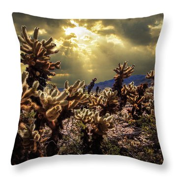Throw Pillow featuring the photograph Cholla Cactus Garden Bathed In Sunlight In Joshua Tree National Park by Randall Nyhof