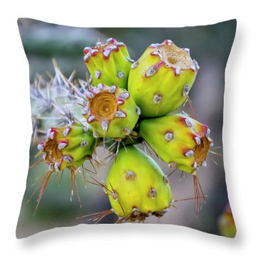 Throw Pillow featuring the photograph Cholla Fruit S48 by Mark Myhaver