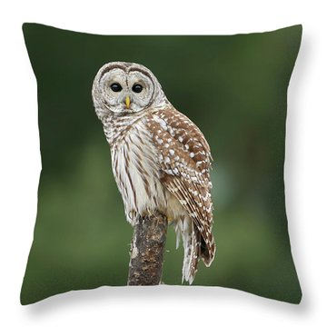 Chouette Perchee. Throw Pillow by Denis Dumoulin