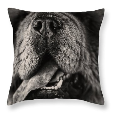 Chow Chow  Throw Pillow by Stelios Kleanthous