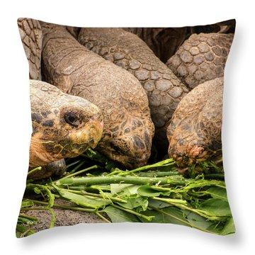 Darwin Research Center Throw Pillows