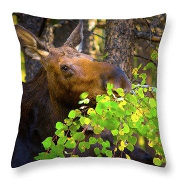 Chow Time Throw Pillow