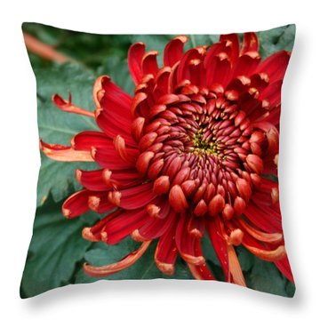 Christmas Chrysanthemum Throw Pillow
