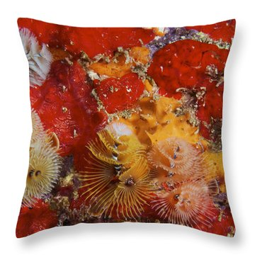 Christmas Tree Worms, Bonaire Throw Pillow by Terry Moore