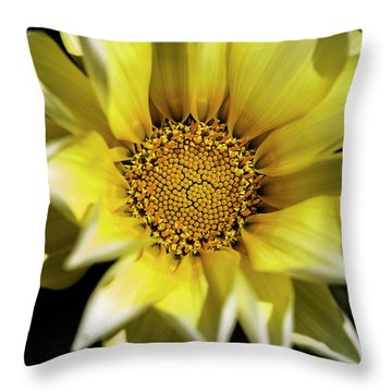 Throw Pillow featuring the photograph Chrysanthos by Linda Lees