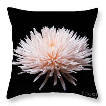 Throw Pillow featuring the photograph Chrysanthemum #0203   by David Perry Lawrence