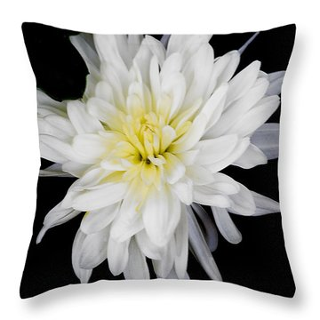 Throw Pillow featuring the photograph Chrysanthemum Bloom by Richard J Thompson