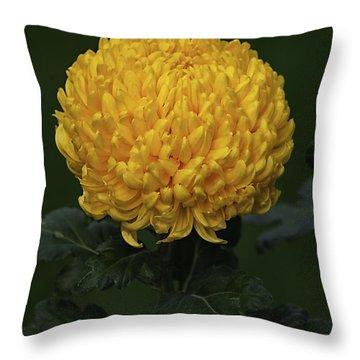 Chrysanthemum 'derek Bircumshaw' Throw Pillow