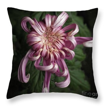 Chrysanthemum 'jefferson Park' Throw Pillow