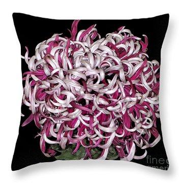 Chrysanthemum 'lili Gallon' Throw Pillow