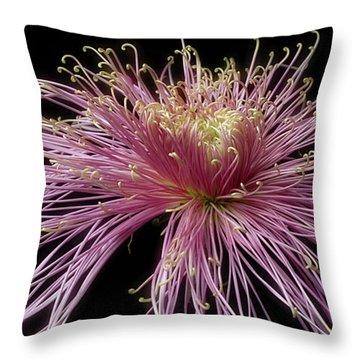 Chrysanthemum 'mystic' Throw Pillow