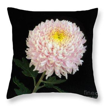 Chrysanthemum 'otome Pink' Throw Pillow