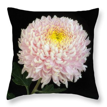 Chrysanthemum 'otome Pink' Throw Pillow
