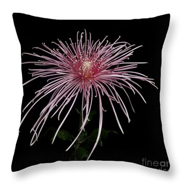 Chrysanthemum 'pink Splendor' Throw Pillow