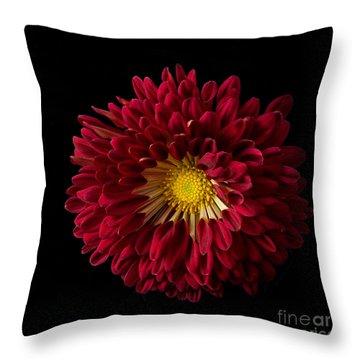 Chrysanthemum 'red Wing' Throw Pillow