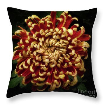 Chrysanthemum 'st Tropez' Throw Pillow