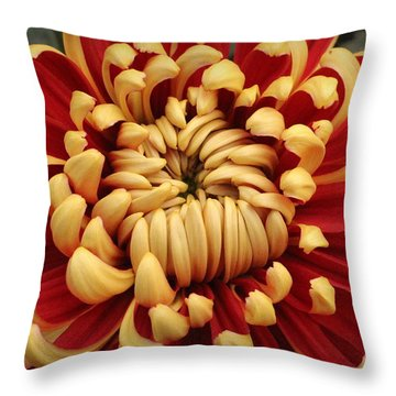 Chrysanthemum In Full Bloom Throw Pillow