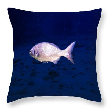 Throw Pillow featuring the photograph Chub by Perla Copernik