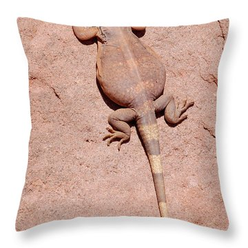 Chuckwalla, Saurolamus Ater Throw Pillow