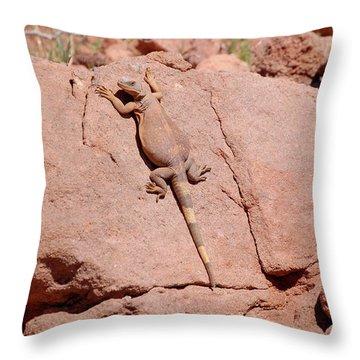 Chuckwalla, Sauromalus Ater Throw Pillow