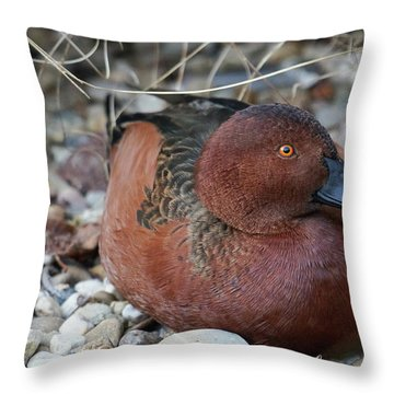 Cinnamon Teal Throw Pillow