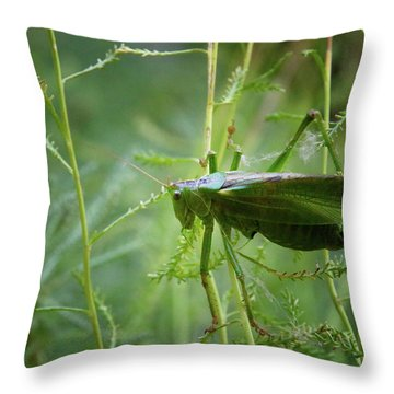 Throw Pillow featuring the photograph Cinq Pattes by Rasma Bertz