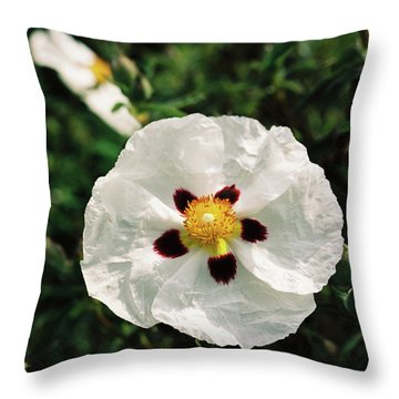 Cistus Cultivar Throw Pillow