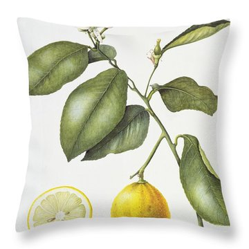 Citrus Bergamot Throw Pillow