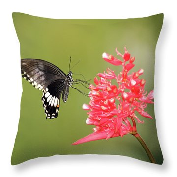 Throw Pillow featuring the photograph Citrus Swallowtail by Grant Glendinning